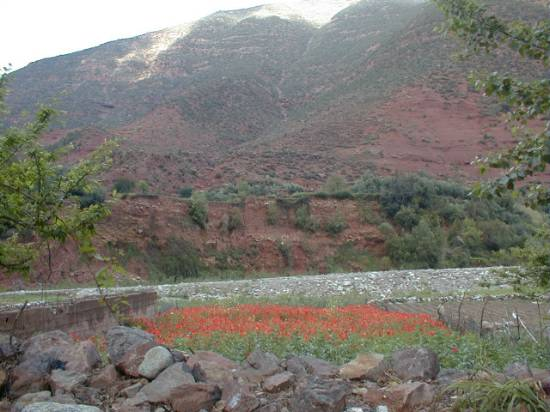sommet-campagne-coquelicots-ourika-marrakech-.jpg*550*412